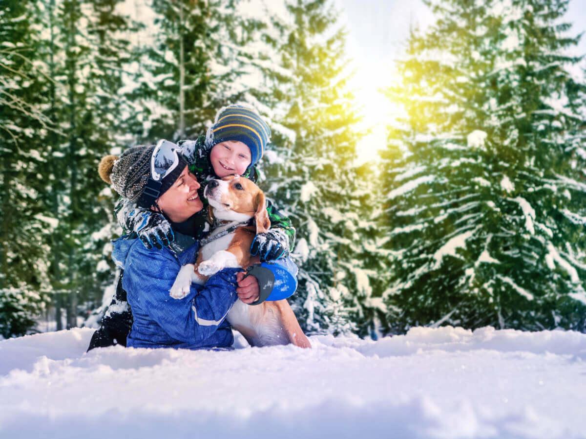 Plimbările cu câinele iarna. Cum să avem grijă de siguranța animalului?