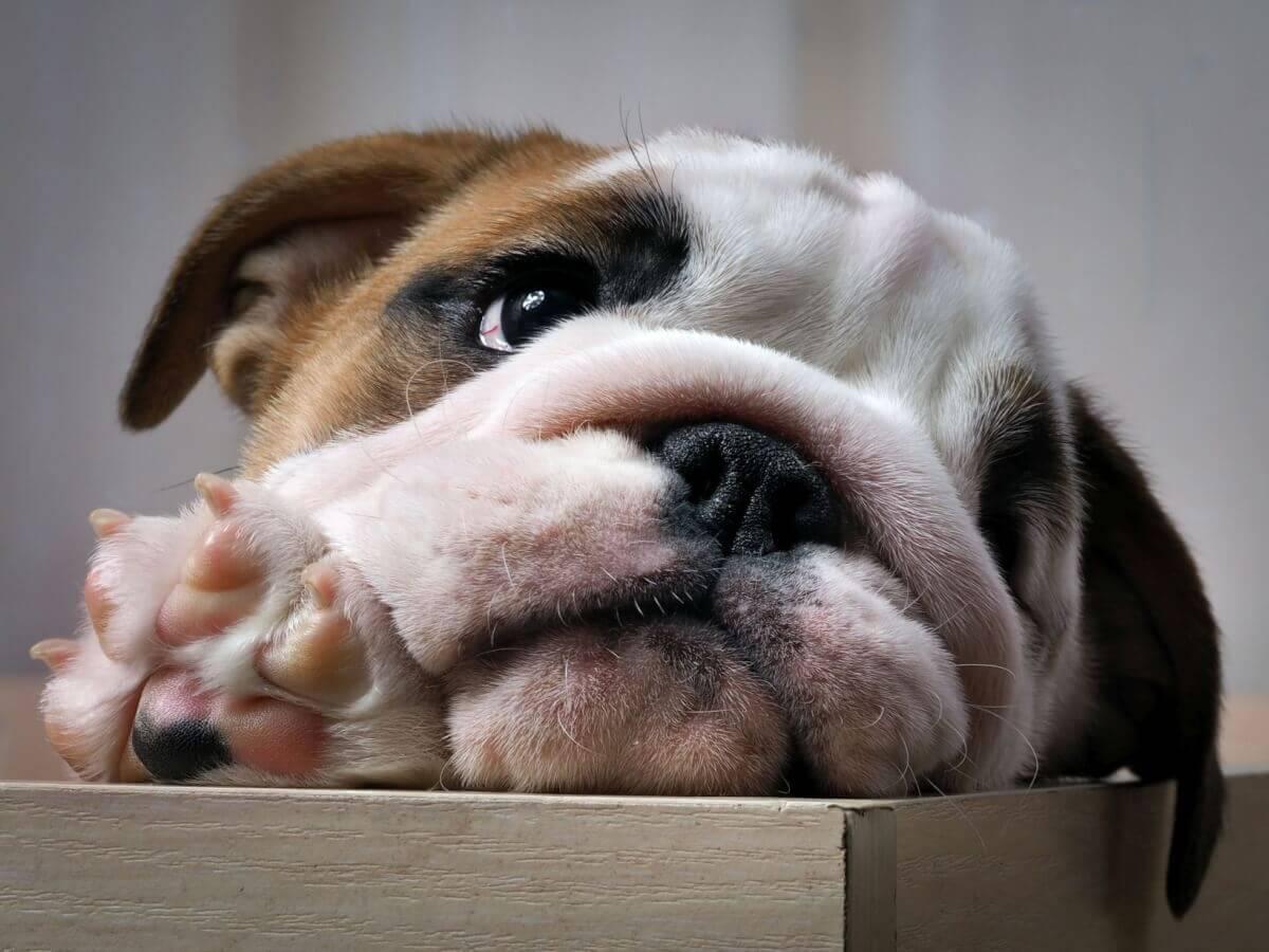 Ce nu are voie să mănânce câinele? Recomandăm ce trebuie evitat.