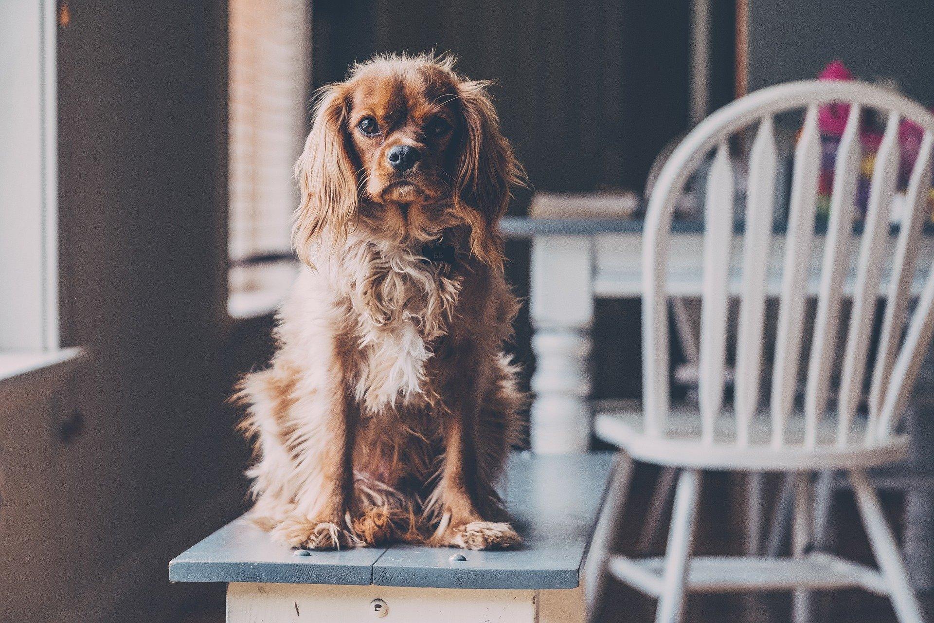 Viața la bloc cu un câine - ce rasă alegem?