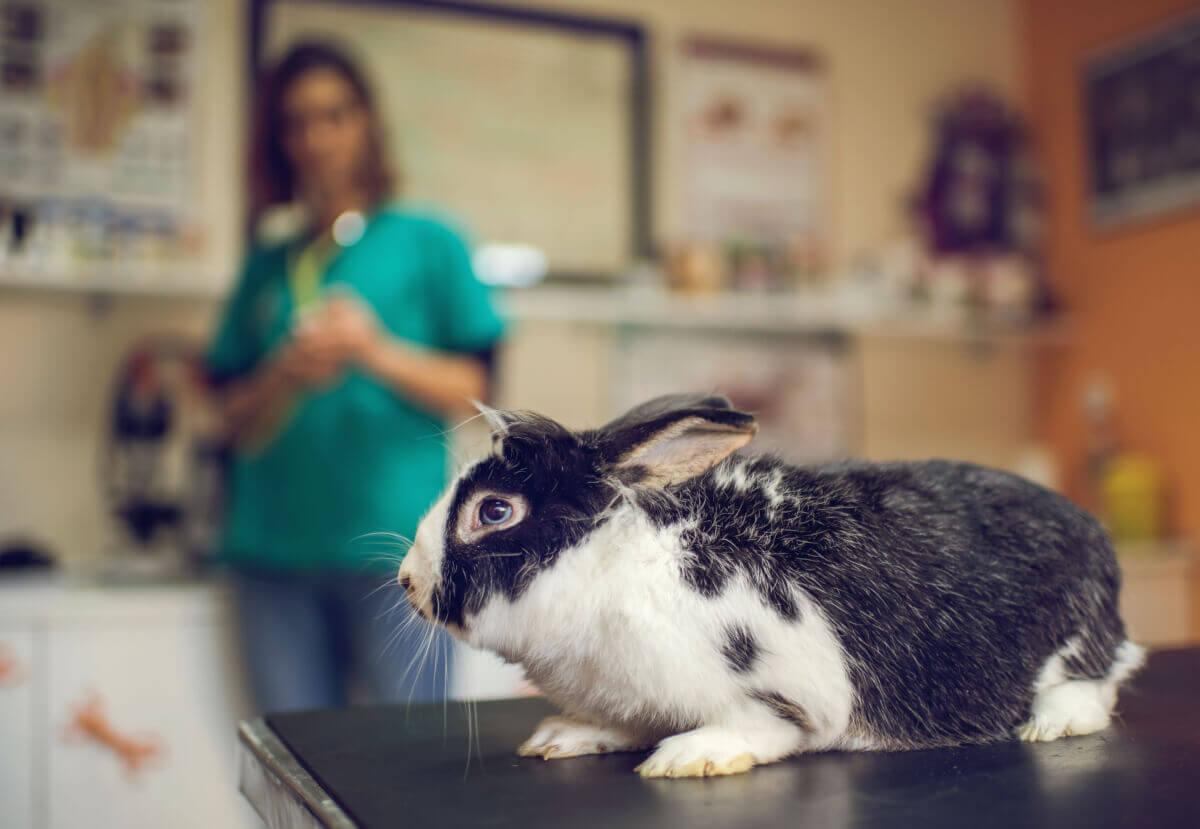 Unele tipuri de hrana pot fi periculoase pentru iepuri. Fiti atenti cu produsele lactate.