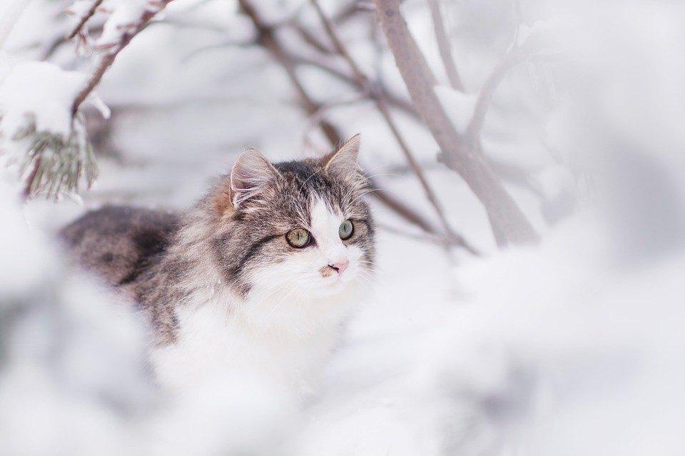 La ce ar trebui sa fie atenti stapanii de pisici care ies afara?