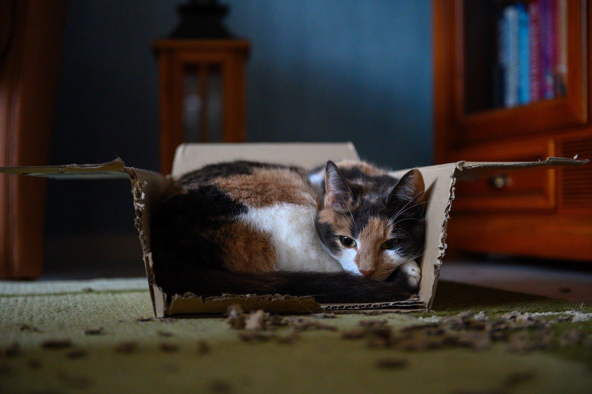 Diareea la pisici nu este mereu un simptom de boala grava, dar ar trebui sa sporeasca vigilenta stapanului. Care sunt cauzele ei?