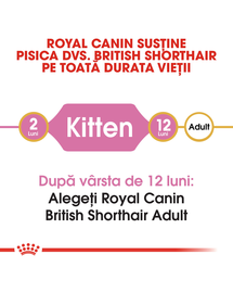 Royal Canin British Shorthair Kitten hrana uscata pisica junior, 10 kg