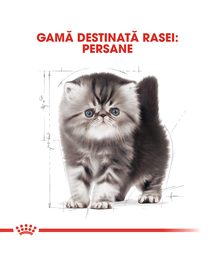 Royal Canin Persian Kitten hrana uscata pisica junior, 2 kg