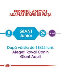 Royal Canin Giant Junior hrana uscata caine junior etapa 2 de crestere , 15 kg