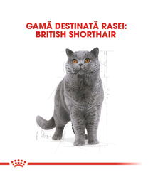 Royal Canin British Shorthair Adult hrana uscata pisica, 10 kg