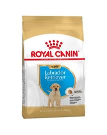 Royal Canin Labrador Puppy hrana uscata caine junior, 12 kg