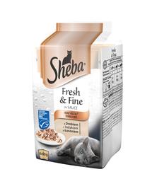 SHEBA Fresh & Fine in sauce 72 x 50g cu păsări de curte, curcan și somon