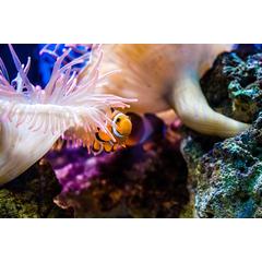 Cand planificati primul acvariu, este necesar sa stabiliti ce tip de peste achizitionam pentru el si ce capacitate ne putem permite. Locatia acvariului nu trebuie sa fie, de asemenea, neplanificata.