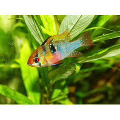Primul acvariu ar trebui sa fie usor de utilizat, iar pestii selectati ss fie de specii adecvate - cei cu cerinte reduse si care traiesc in armonie.