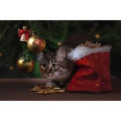 Ce-i de facut ca pisica si cainele sa nu se teama de Revelion? Cum sa-ti ajuti animalul sa faca fata la stres?