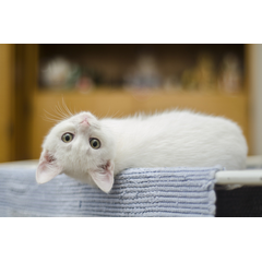 Deparazitarea pisicii este obligatia fiecarui proprietar. Merita sa stii cum se face corect deparazitarea, cand sa administrezi preparatele antiparazitare si cat de des.