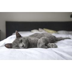 FIV este un virus care ataca pisicile si provoaca o boala care are un curs similar cu SIDA la oameni.