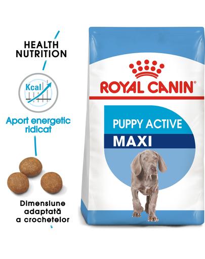 ROYAL CANIN Maxi Puppy Active hrana uscata pentru juniori de rase mari cu cerinte energetice mai mari 15 kg