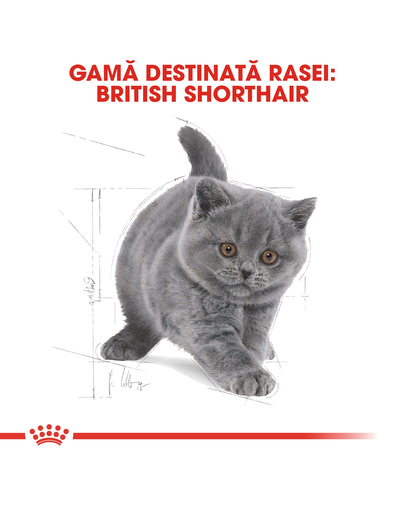 Royal Canin British Shorthair Kitten hrana uscata pisica junior, 2 kg