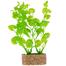 TRIXIE Plantă pe piatră mică 12 cm 6 buc.