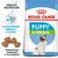 Royal Canin X-Small Puppy hrana uscata caine junior, 500 g