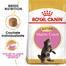 ROYAL CANIN Kitten maine coon 400 g