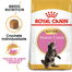 Royal Canin Maine Coon Kitten hrana uscata pisica junior, 2 kg