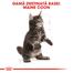 Royal Canin Maine Coon Kitten hrana uscata pisica junior, 10 kg