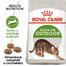 ROYAL CANIN Outdoor 30 hrana uscata pentru pisicile adulte care ies afara 10 kg